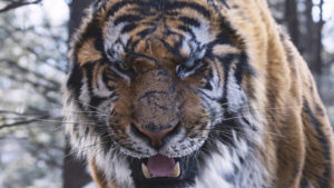 隻眼の虎23